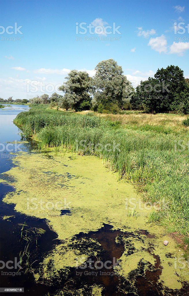 Havel river landscape with willow tree stock photo