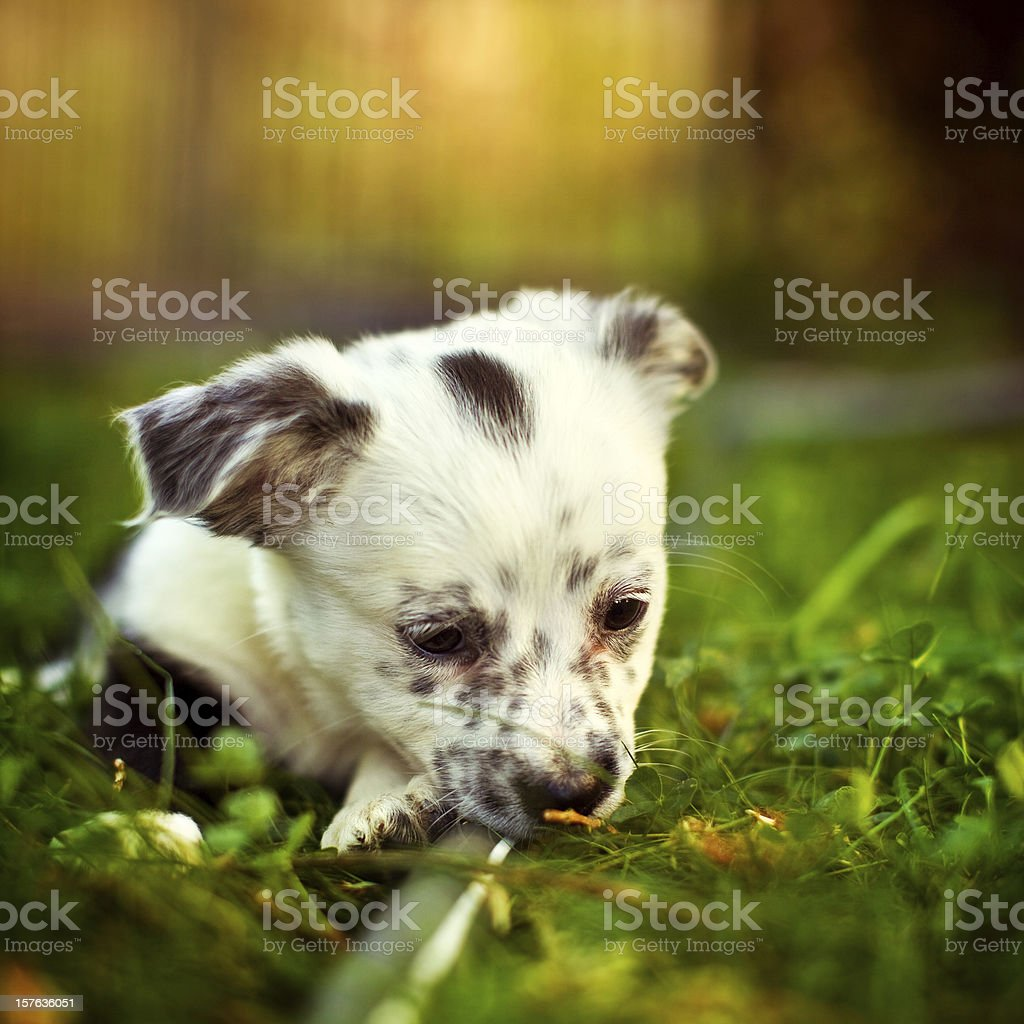 Having a Bad Day stock photo
