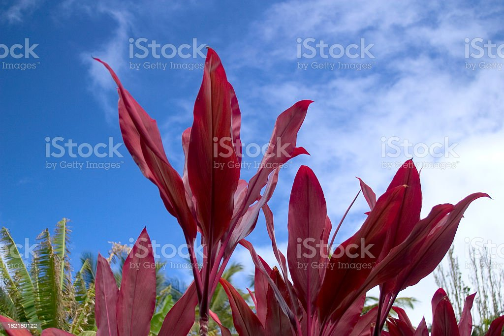 Hawaii Flowers royalty-free stock photo