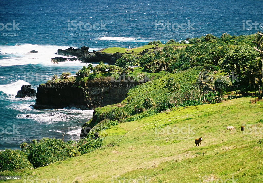 Hawaii horse, meadow and sea royalty-free stock photo