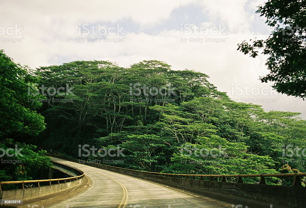 Hawaii Jungle road stock photo
