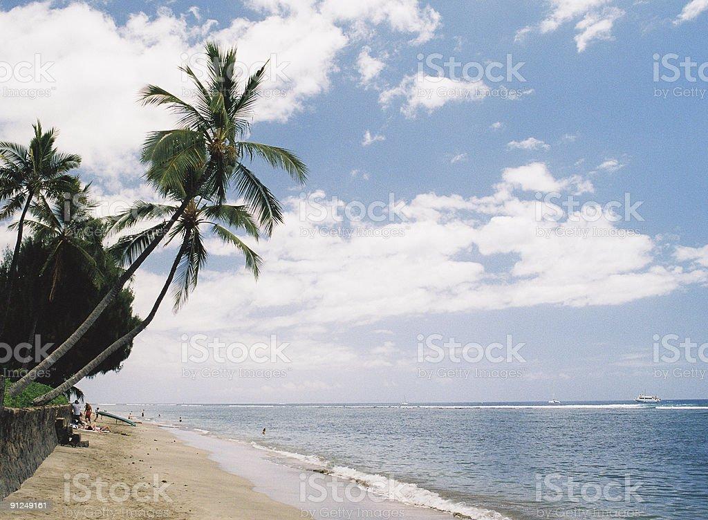Hawaii Pacific ocean palm scenic stock photo