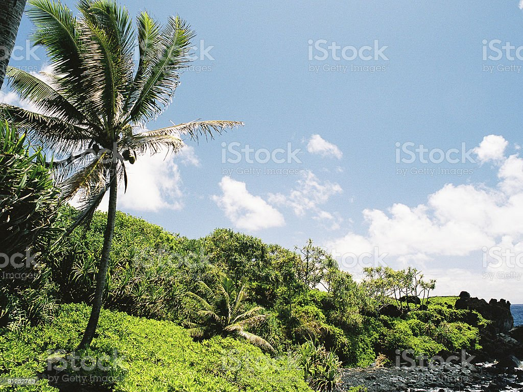 Hawaii palm scenic royalty-free stock photo