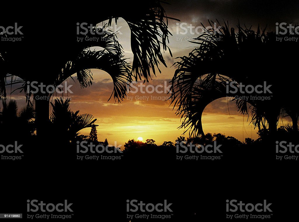 Hawaii palm silhouette stock photo