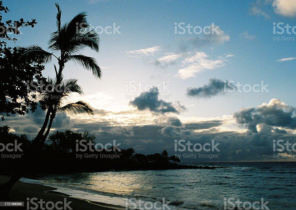 Hawaii palm sunset stock photo