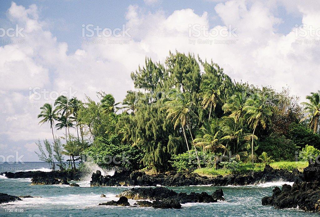 Hawaii palm tree beach scene stock photo