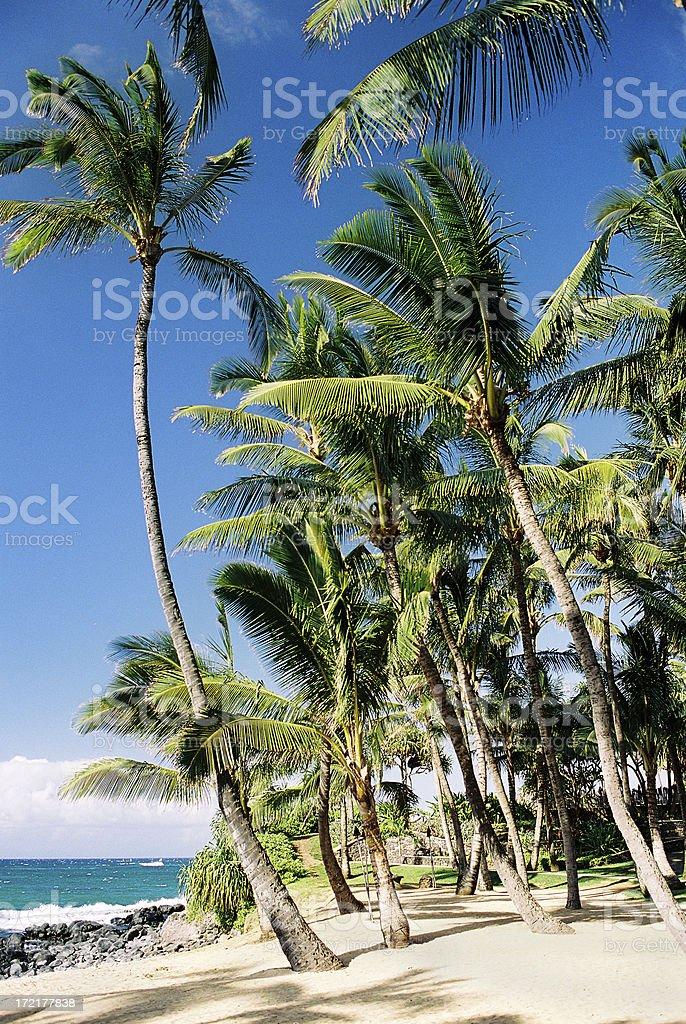Hawaii Palm tree beach scenic royalty-free stock photo