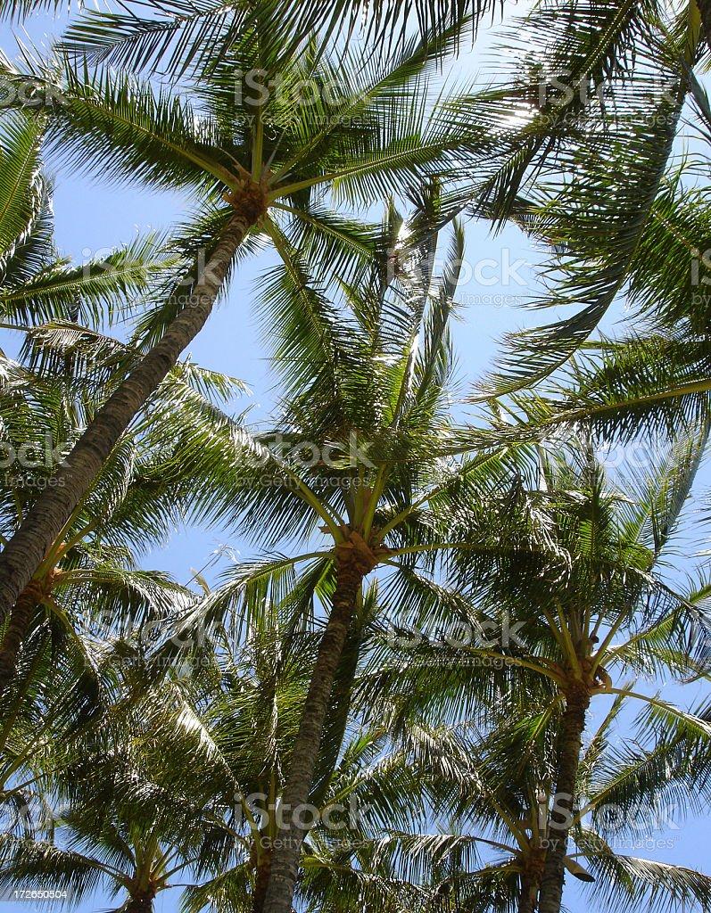 Hawaii Palm tree beach scenic stock photo