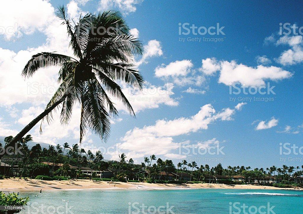 Hawaii Palm tree  hotel beach scene stock photo