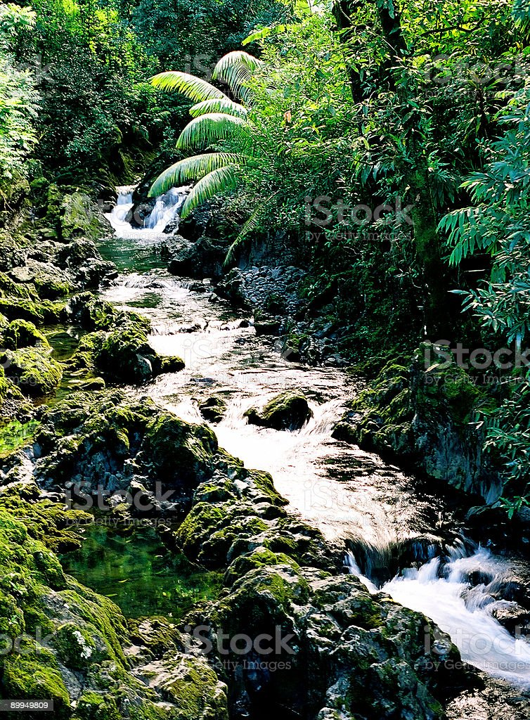 Hawaii palm tree lined stream stock photo