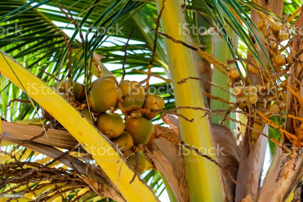 Hawaii - Palm Tree stock photo
