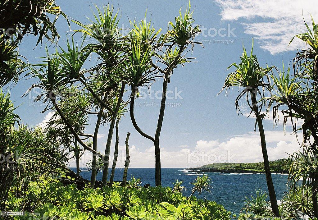 Hawaii Palm tree Scenic stock photo