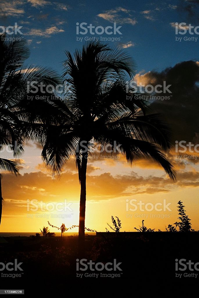 Hawaii palm tree sunset stock photo