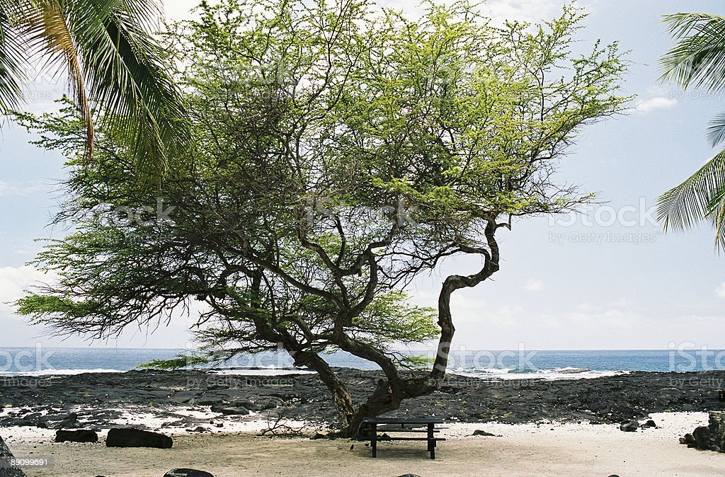 Hawaii picnic bench scenic stock photo