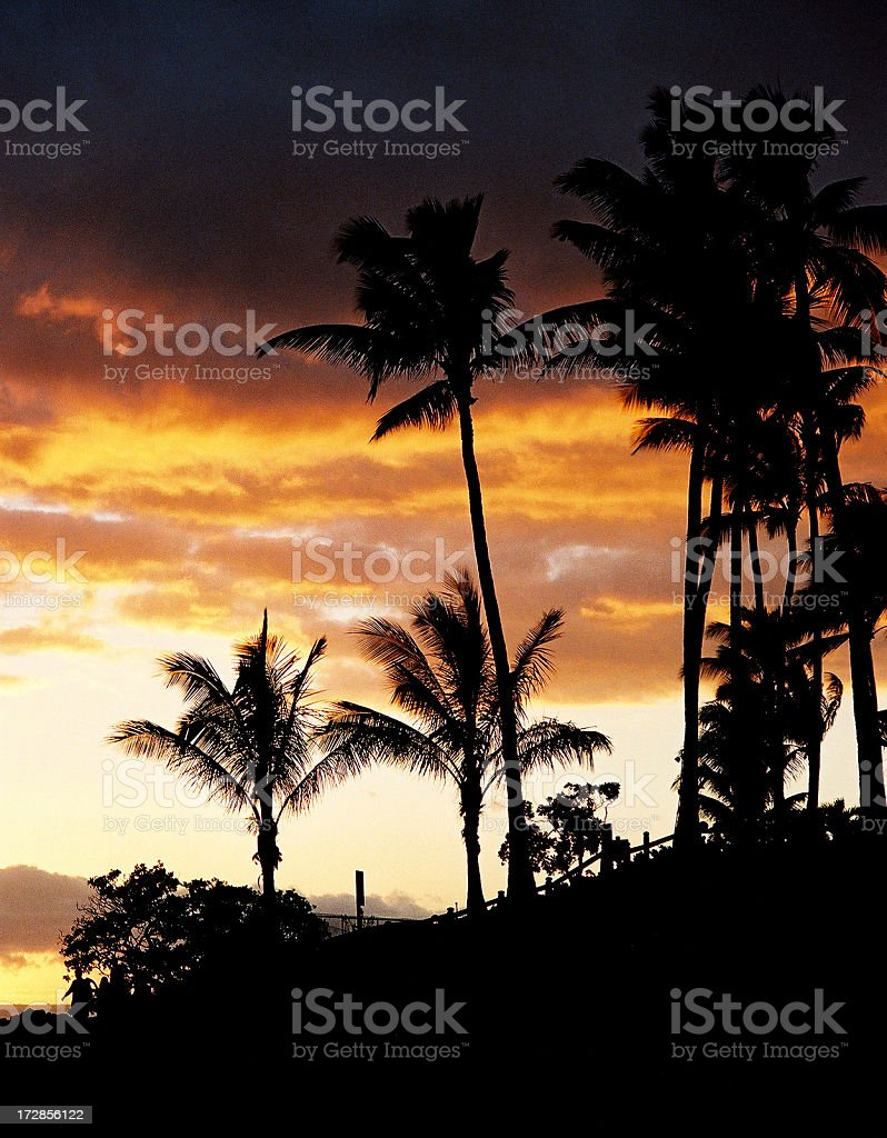 Hawaii style sunset vertical royalty-free stock photo