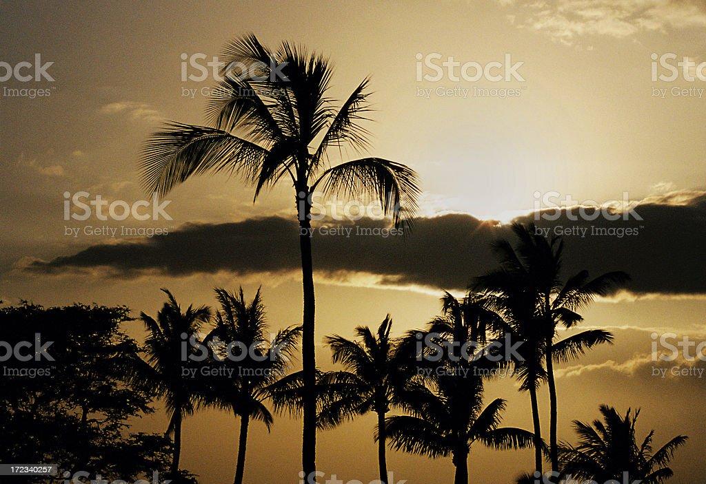 Hawaii Sunset silhouette royalty-free stock photo