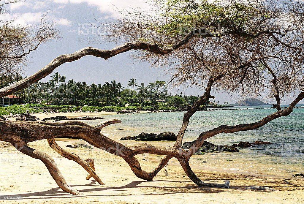 Hawaii tree scenic royalty-free stock photo
