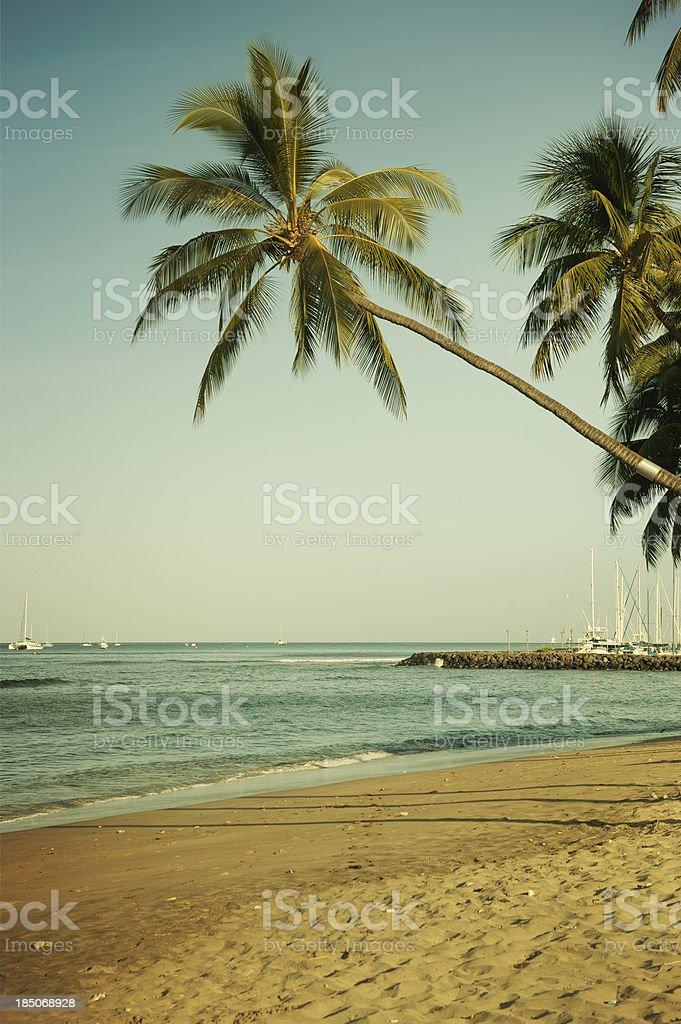Hawaiian Beach with Palm Tree stock photo