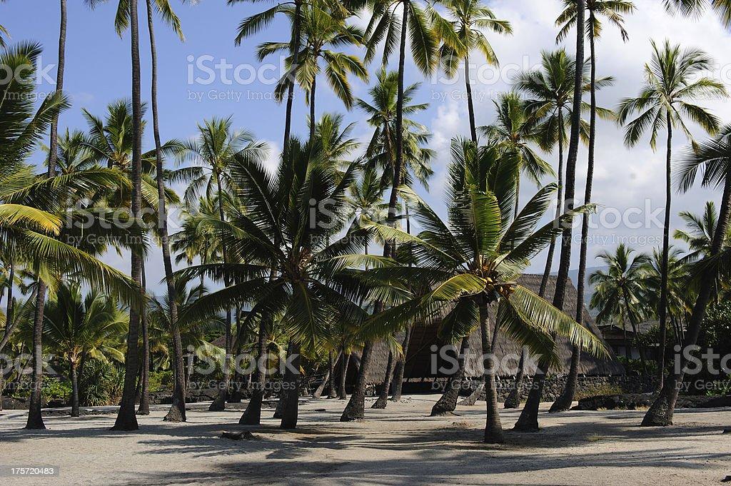 Hawaiian Boat House royalty-free stock photo