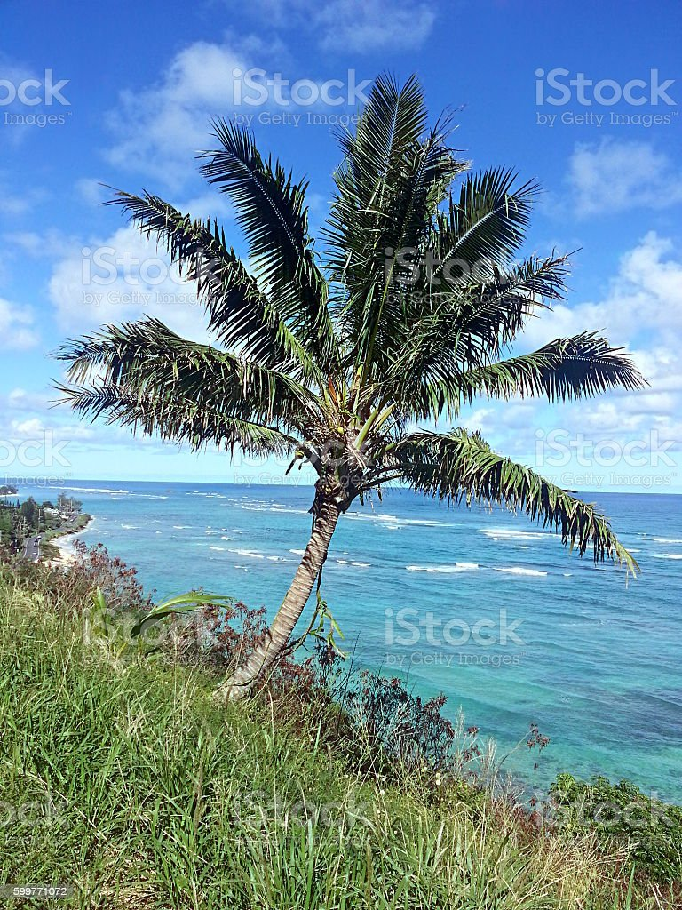 Hawaiian Coconut Tree against Pacific Ocean stock photo