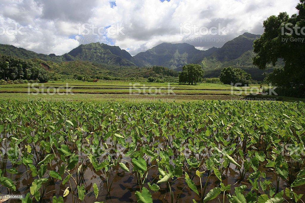 Hawaiian Farmland royalty-free stock photo