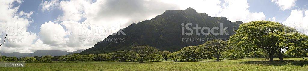 Hawaiian green valley with rain trees stock photo