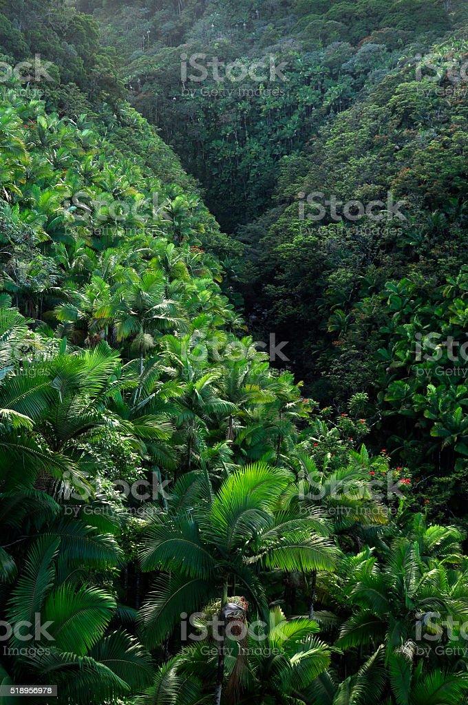 Hawaiian jungle royalty-free stock photo