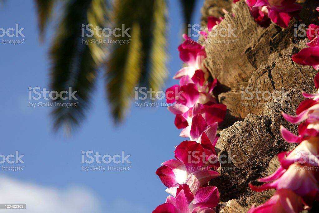 hawaiian lei on palm tree stock photo