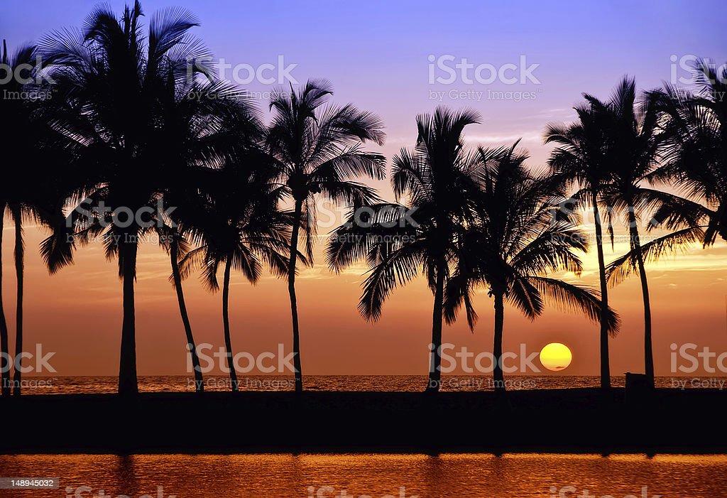 Hawaiian palm tree sunset stock photo