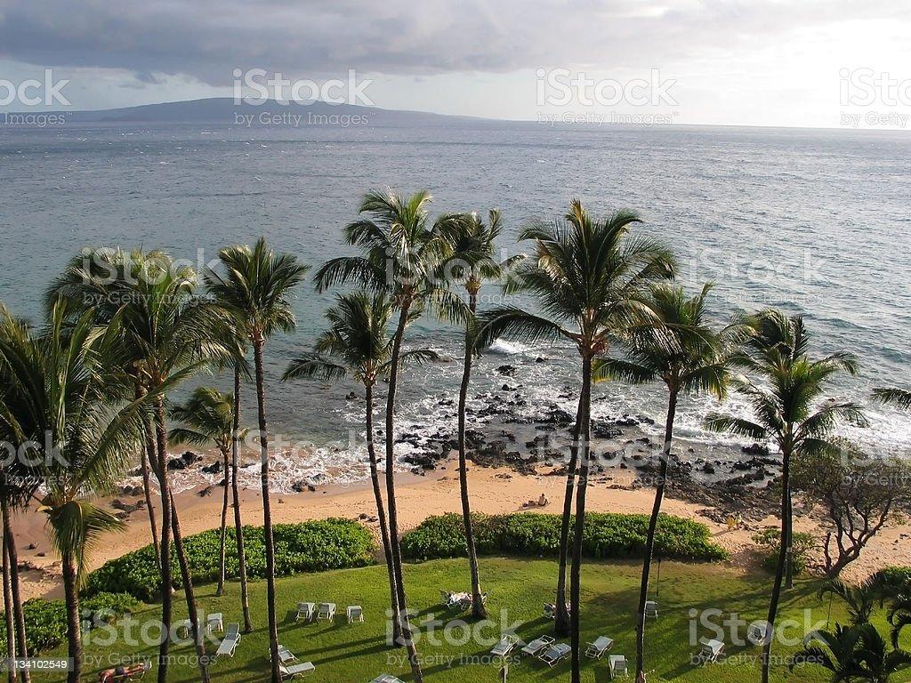 Hawaiian Palms and Beach stock photo