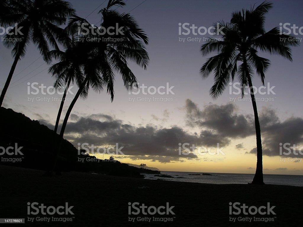Hawaiian Palms royalty-free stock photo