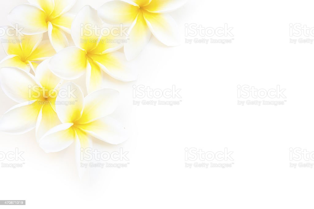 Hawaiian Plumeria Corner Border Horizontal stock photo