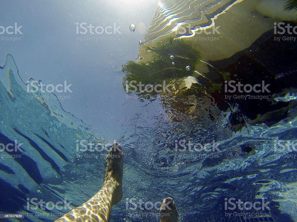 Hawaiian Resort from Underwater royalty-free stock photo
