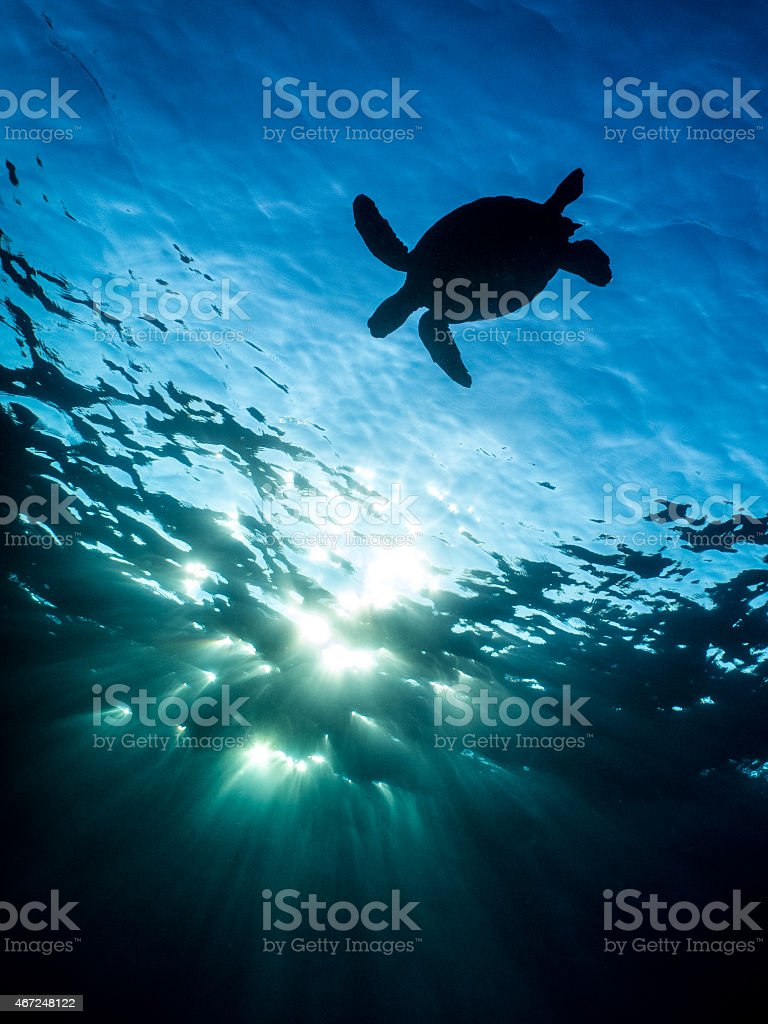 Hawaiian Sea Turtle Sillouette stock photo