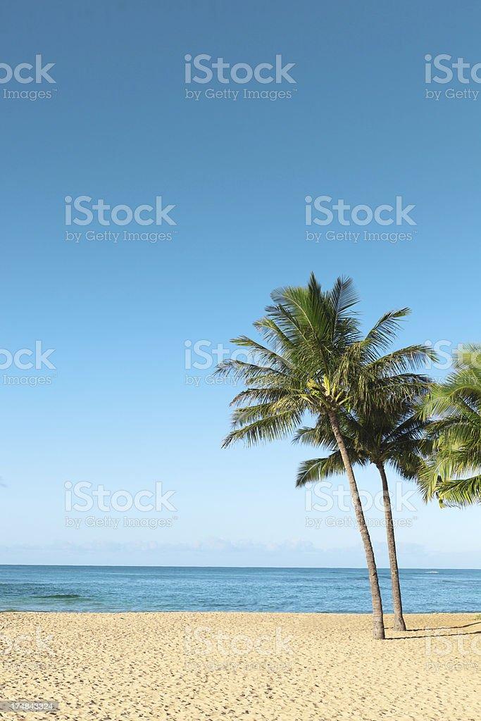 Hawaiian Vacation Palm Trees by Pacific Ocean, Brennecke Beach, Kauai royalty-free stock photo
