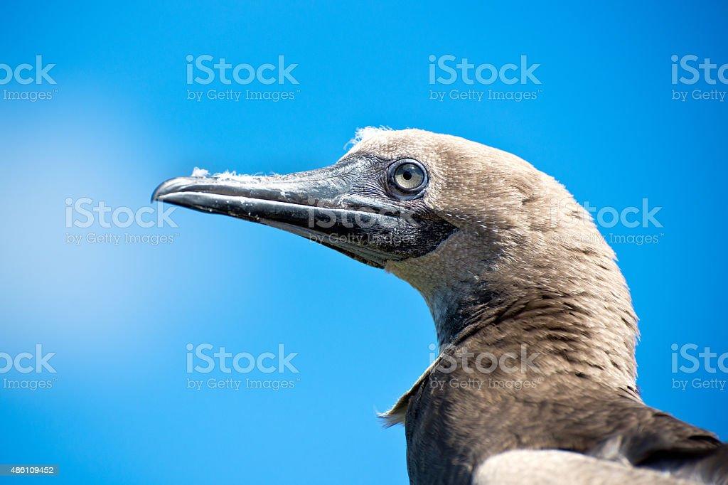 Hawiian Sea bird stock photo