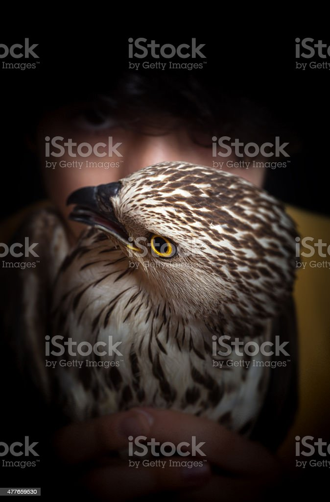 Hawk and boy stock photo