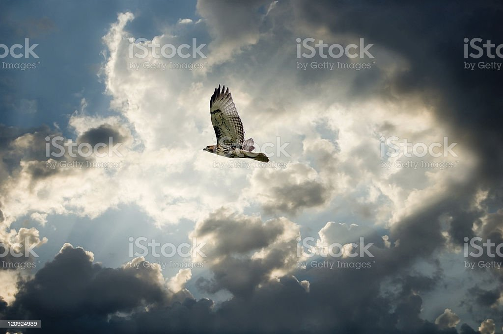 Hawk and Moody Sky with dark clouds forming stock photo