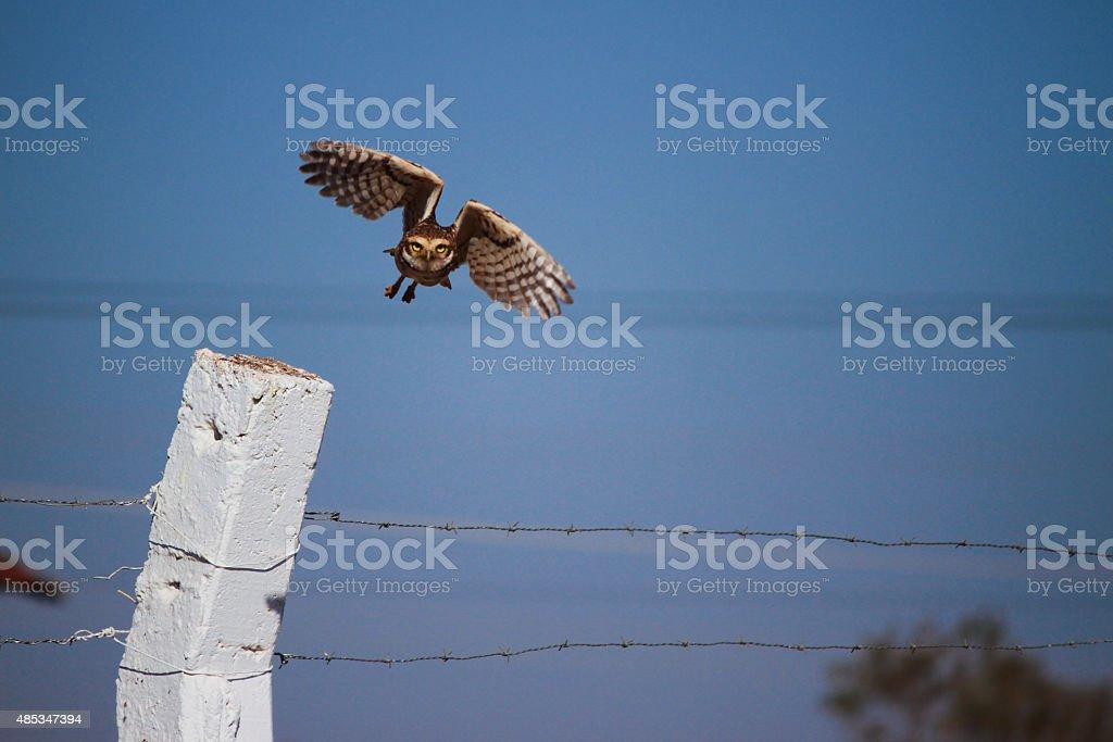 Hawk attack stock photo
