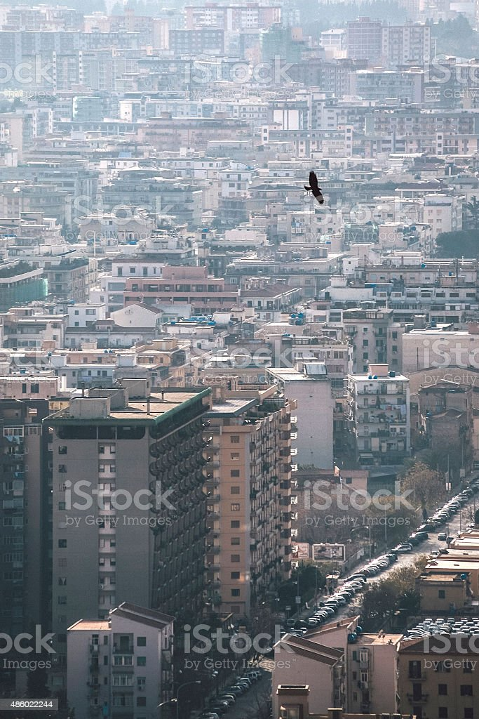 Hawk flying over city. Palermo, Sicily. stock photo