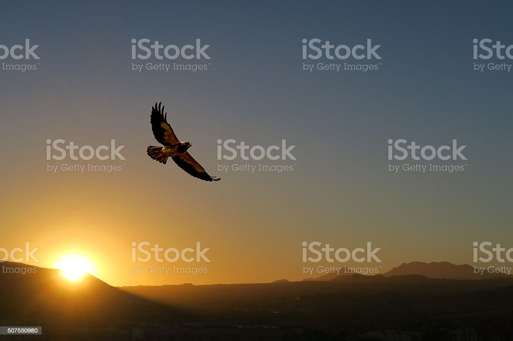 Hawk flying to its roost over Mexican desert at sunset. stock photo