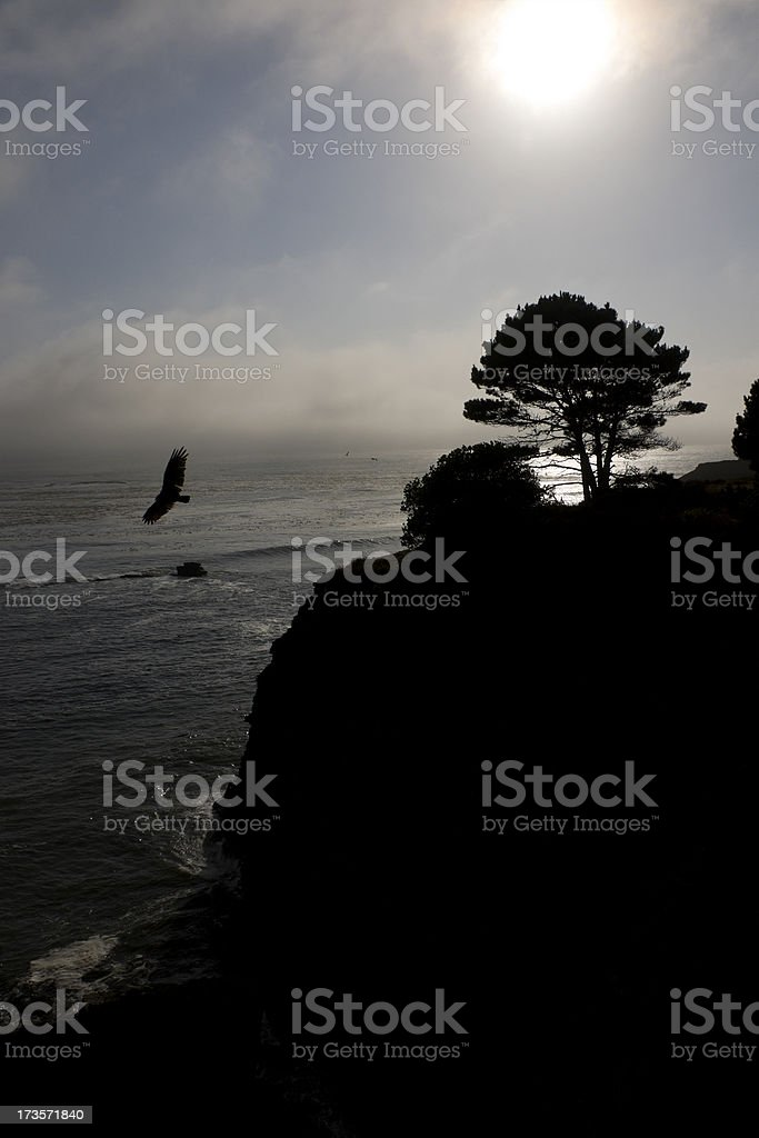 Hawk over Cliffs stock photo
