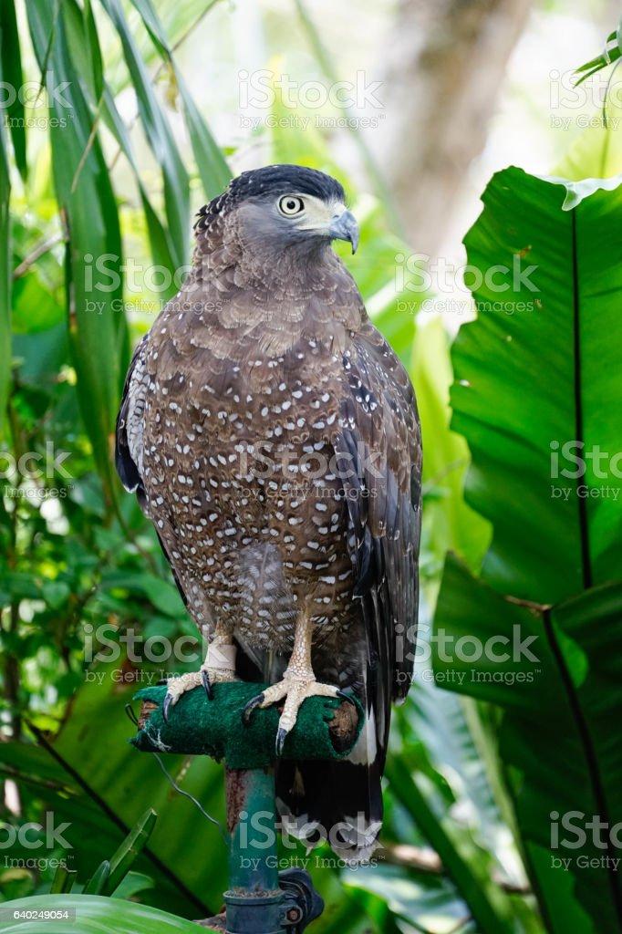 Hawk standing on steel branch stock photo