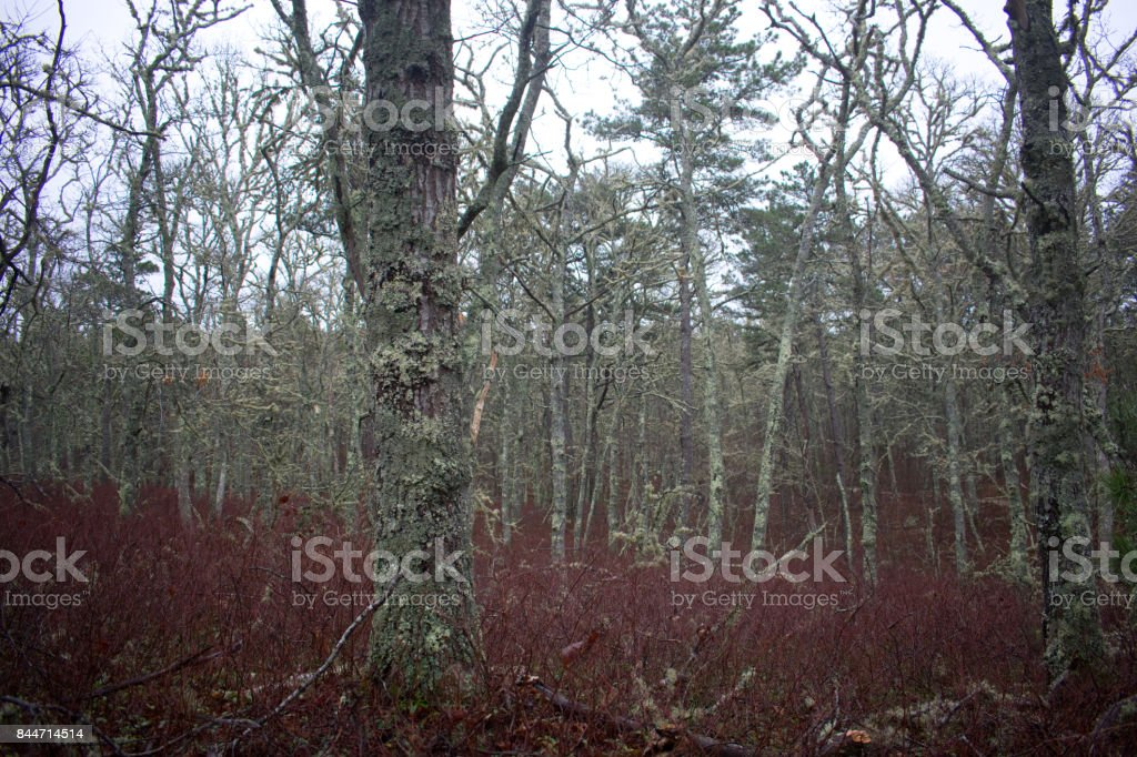 Hawksnest State Park stock photo