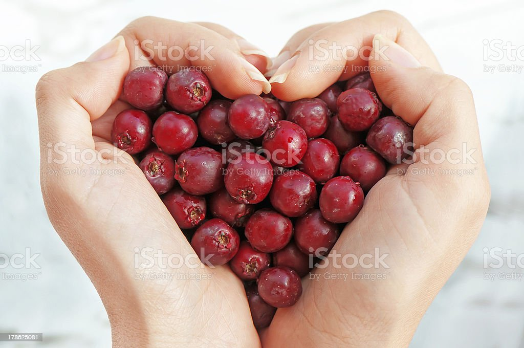 Haws in heart shap hands royalty-free stock photo