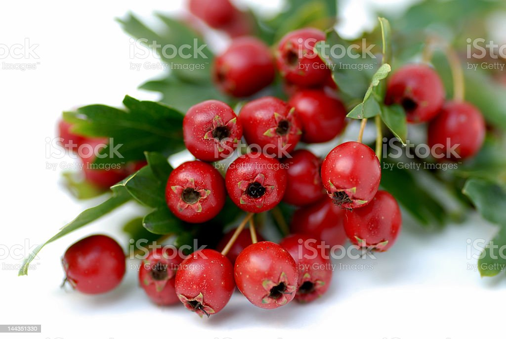 Hawthorn beeries royalty-free stock photo