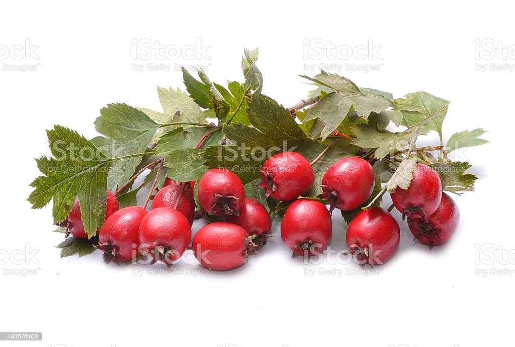 Hawthorn fruit stock photo