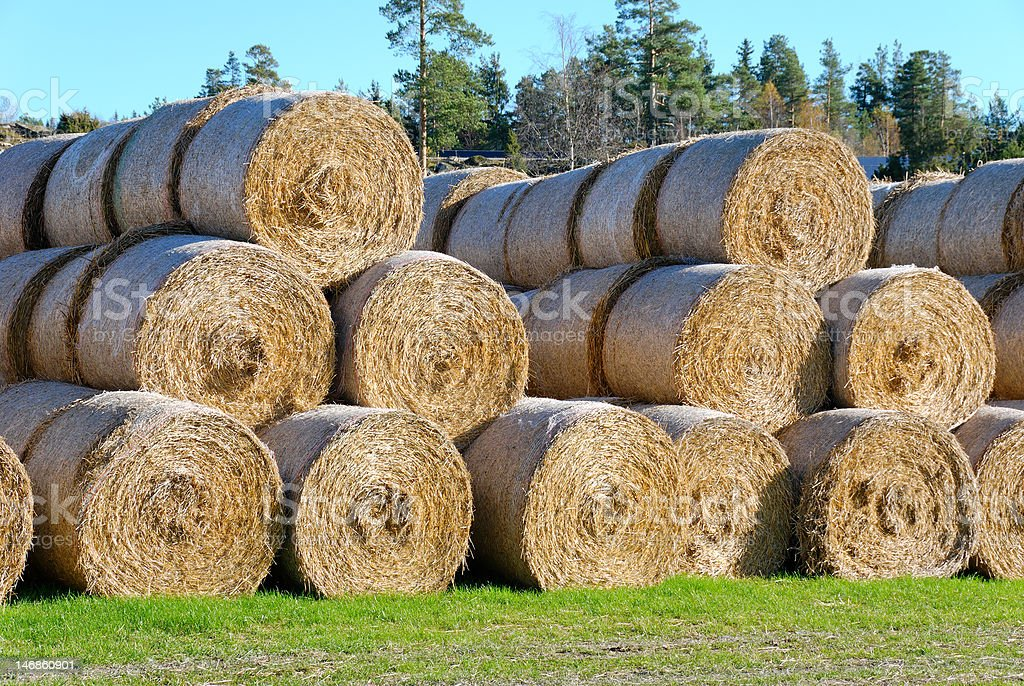 Hay Bails from Side stock photo