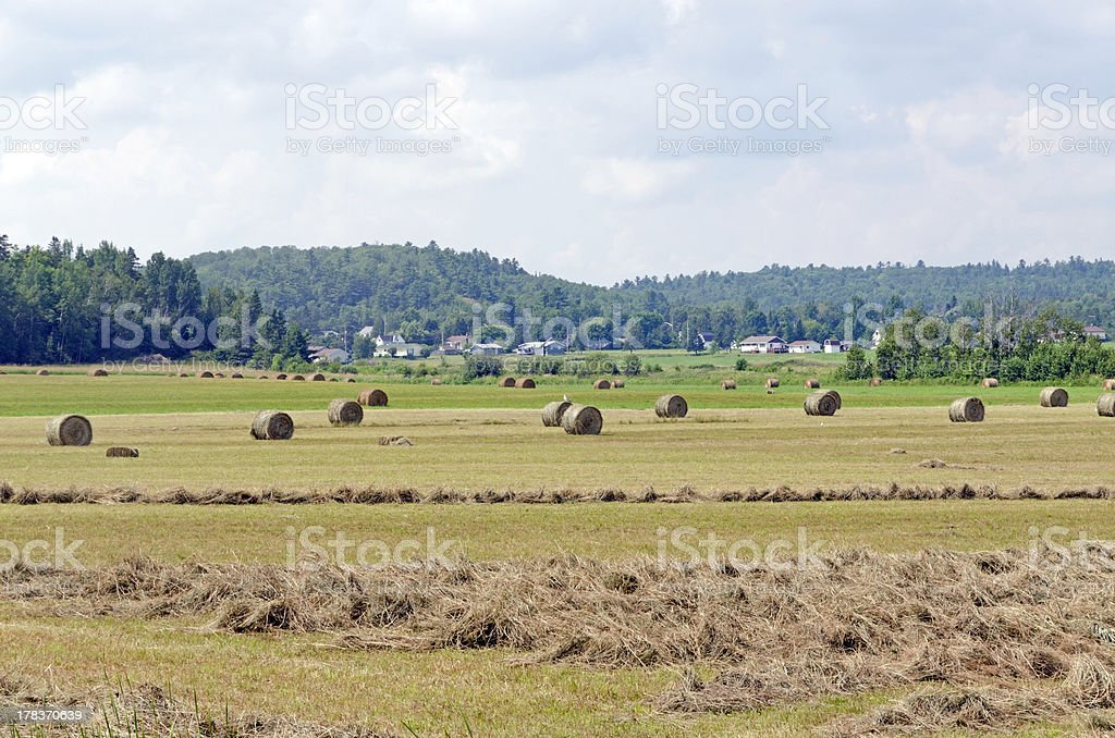 Hay bails in a field royalty-free stock photo