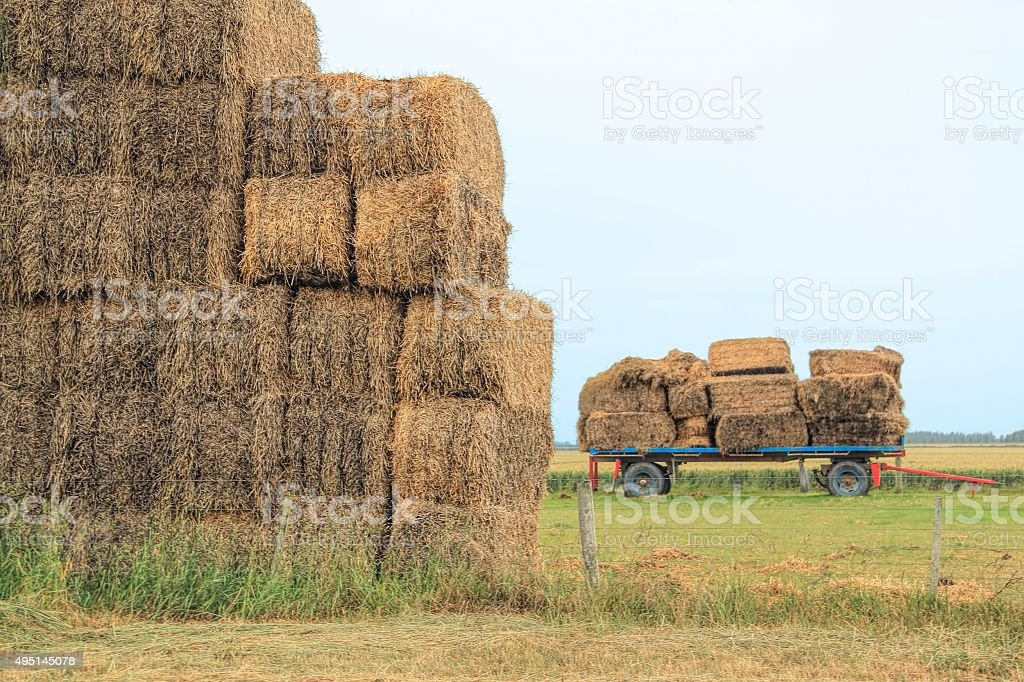 Hay bails stacked in a farm stock photo
